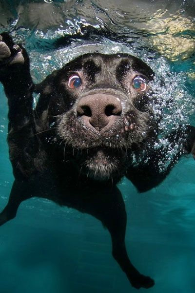 My two favourites - dog + being under water!
