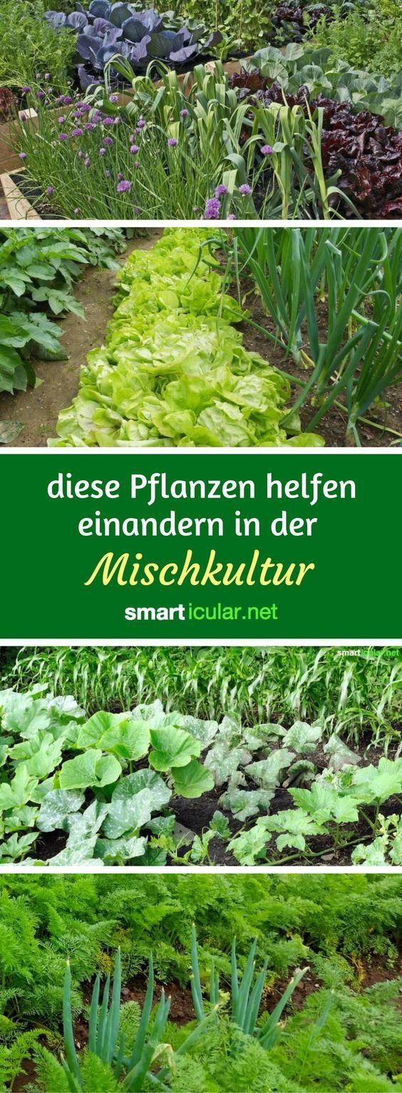 Gärtnern ohne Chemie – dank Mischkultur – dtp_sonne