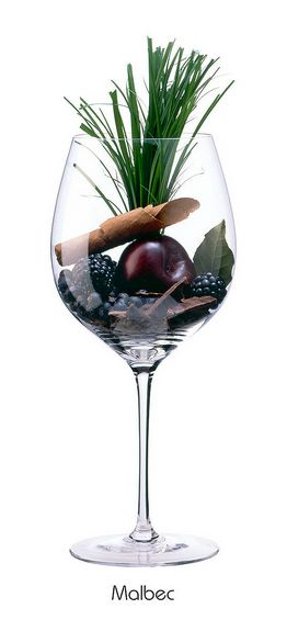 MALBEC: Arômes de Mûre, prune , feuille de laurier , genièvre , chocolat amer , tabac , l'herbe verte , clou de girofle.