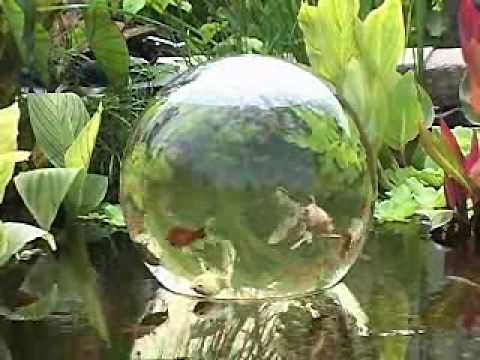 "OMG I WANT THIS!!!  This video by Garden Gate shows how easy it is to install an Add-A-Sphere into your water garden.  The Add-A-Sphere allows your fish to ""swim"" above the water surface.  It is available on our www.ShopTJB.com on-line storefront (http://shop.tjb-inc.com/Product929)"