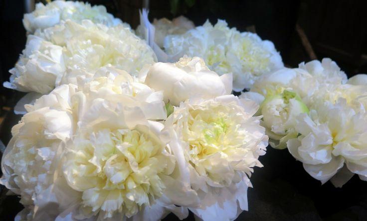 Luxurious white peonies