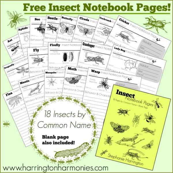 Insect Notebook Pages {Free