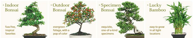 Browse this site. Brussel's Bonsai Nursery, Bonsai Trees and Accessories