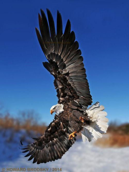 ◘ Soar Like An Eagle........  =))