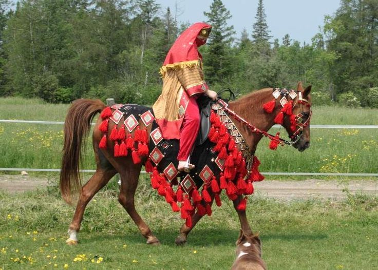 13 best Arabian costume images on Pinterest | Arabian ...