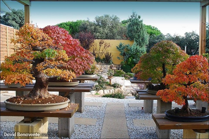 Bonsai garden, my-oh- my!