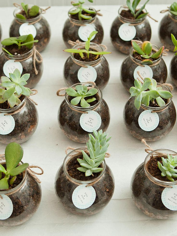 Invite your guests to grow together in love with these modern, springtime potted succulent plants!