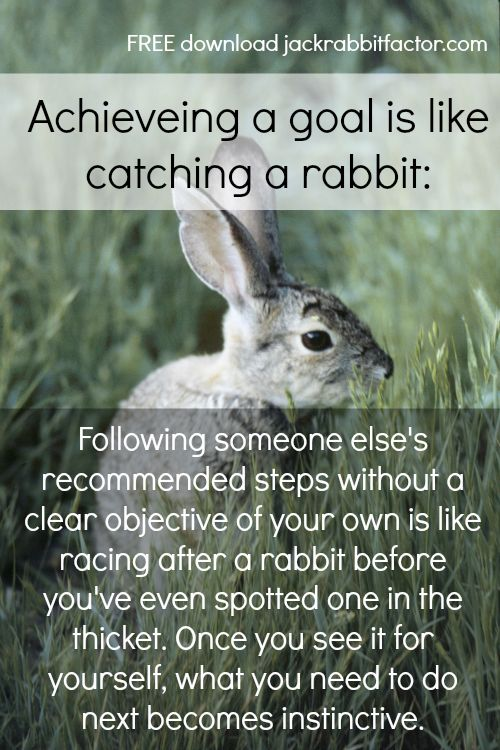 The Parable of the Jackrabbit   47 Positive Thinking Tips