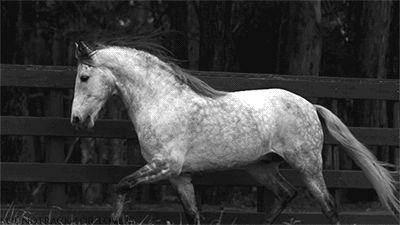 Cavalo indomável