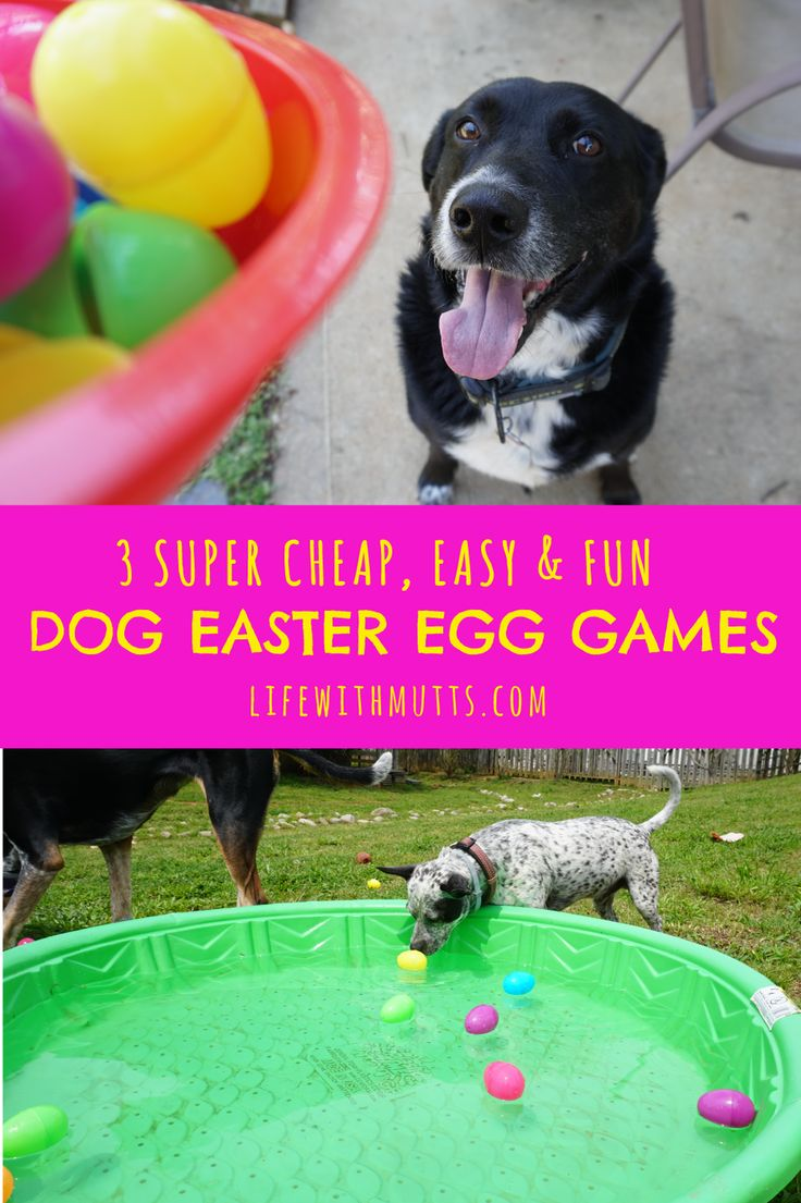 Easter is going to the dogs! 3 fun (cheap) Easter activities using plastic Easter Eggs to keep your dog engaged and mentally stimulated.