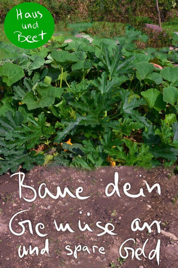 Bauen Sie Ihr eigenes Gemüse und sparen Sie Geld – #gemeine #gemuse #spare – #Little …