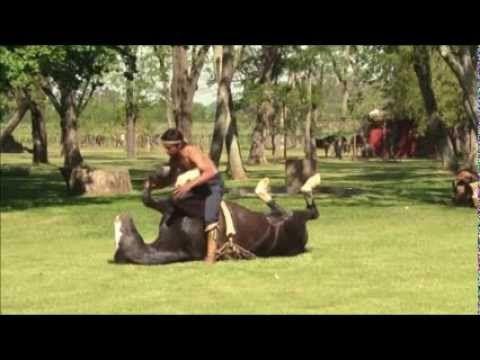 Beautiful and breathtaking demonstration of horses yoga - YouTube