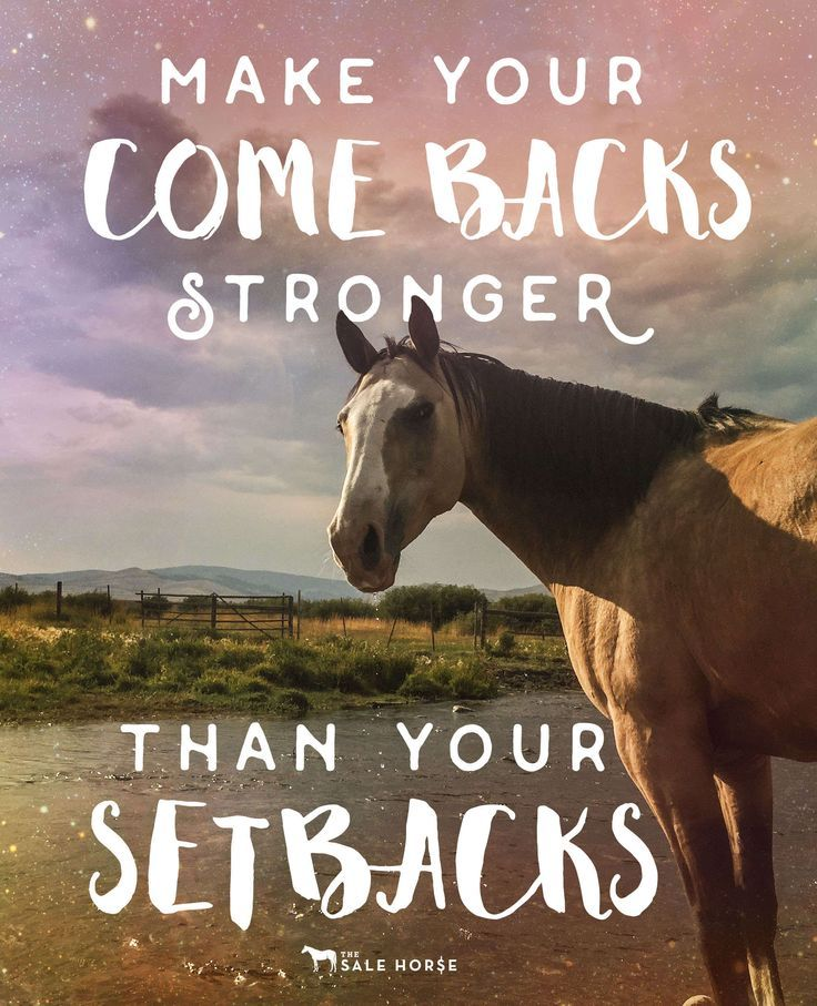 25 best inspirational horse quotes on pinterest horse