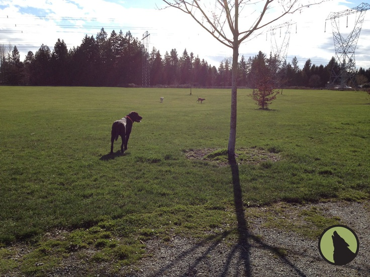 Dog Parks In Langley Bc
