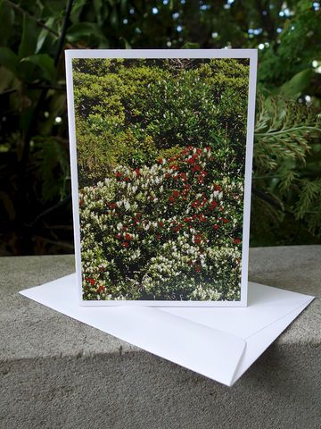 Pohutukawa Card - image by Mark Smith.