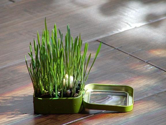 Altoids Tins Garden by Marque Cornblatt