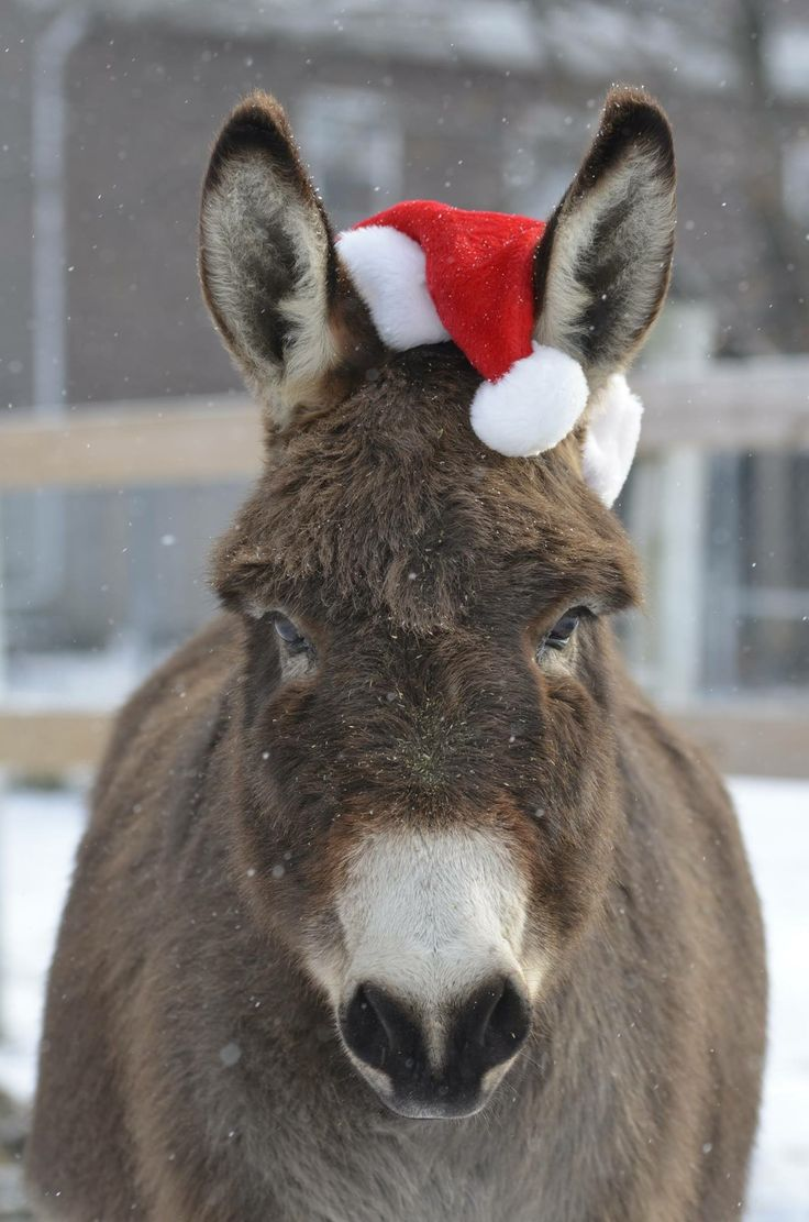 Judy Ziegler ~ It's beginning to look a lot like Christmas!