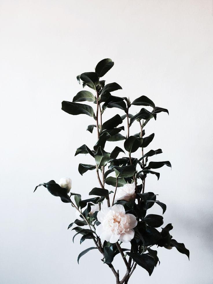 Blooms | racbelle | VSCO Grid