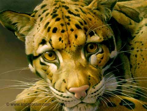 Linda Rossin - Wildlife Artist - A Leopard to Gaze At - Clouded Leopard from The Fading Patterns Collection