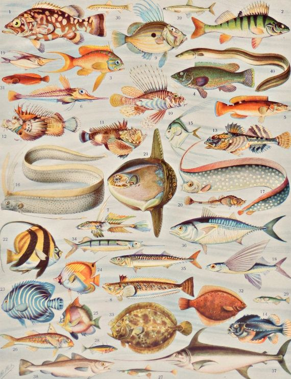 "Vintage print.1920's.FISHES.Beautiful print.80 years old print.Vintage illustration.Antique print,Fish prints12,1x9,4"" or 24x31cm."