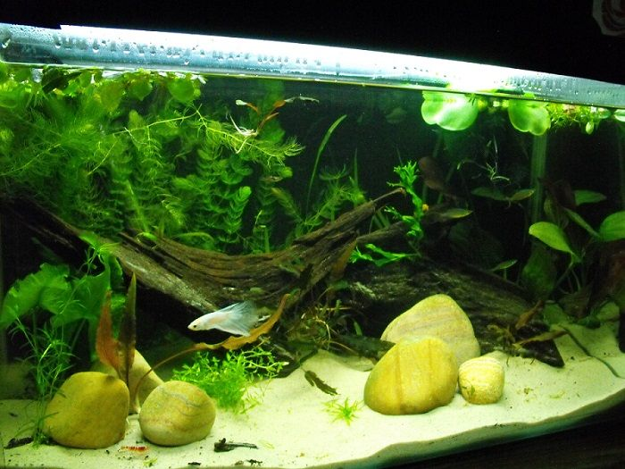 1000 images about betta habitats on pinterest betta for Betta fish habitat
