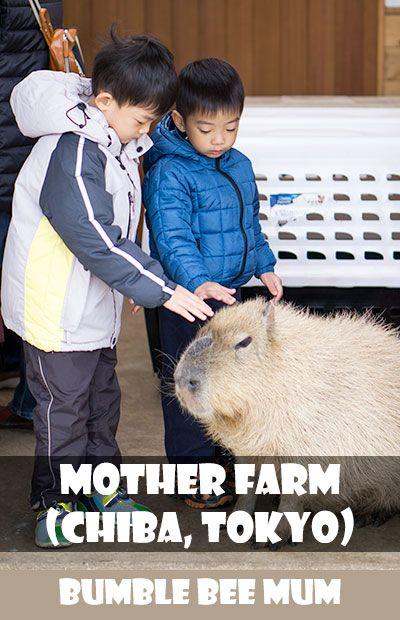 Mother Farm (Chiba, Tokyo) - Bumble Bee Mum