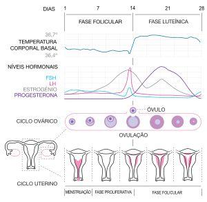 Menstruação – Wikipédia, a enciclopédia livre