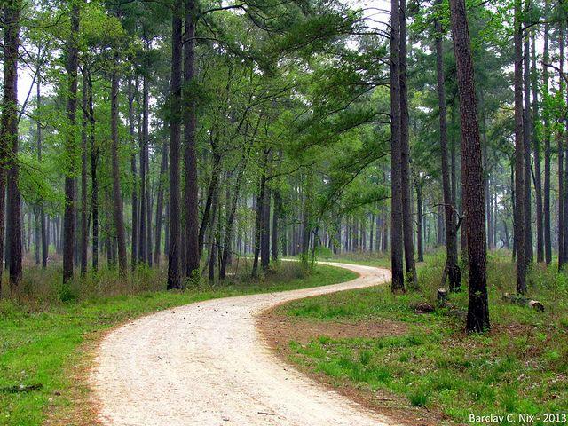 1) Sam Houston National Forest