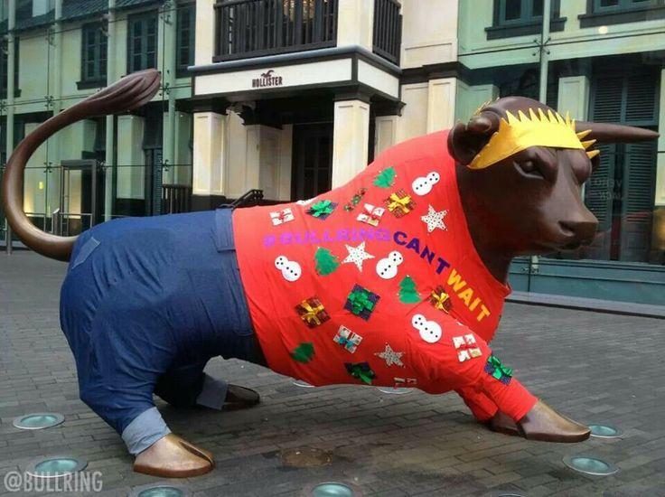 Birmingham Bull ready for Christmas!