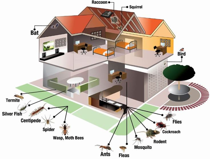 images for pests in homes - Google Search