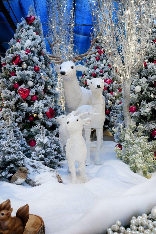 Ghiaccio, neve, animali del bosco: siamo nel regno magico di Babbo Natale!  #christmas #winter #ice #snow #santa #polar #lights