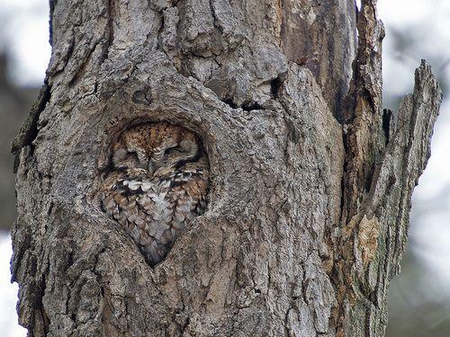 i wonder how many owls i walk by and never notice