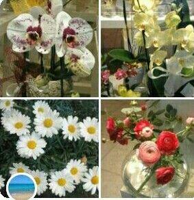 Collage dei miei fiori