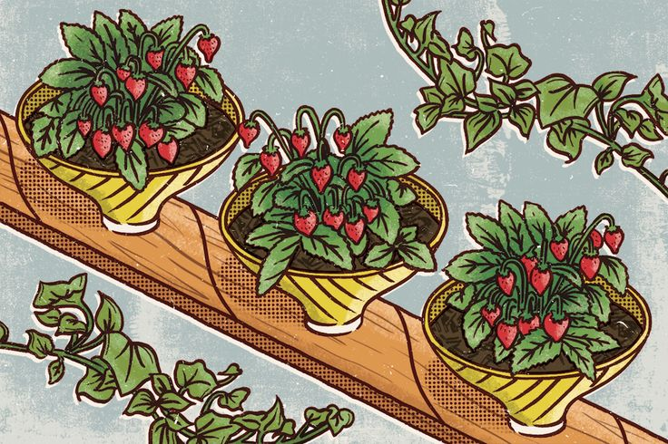 An unconventional use for an old light fixture is using its shades to grow  strawberries – they'll keep the plant's invasive roots contained for the  season. You could keep the fitting intact for a statement feature, or use  shades individually.  YOU WILL NEED Second-hand light fixture with se