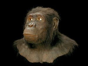 Diet and Primate Evolution
