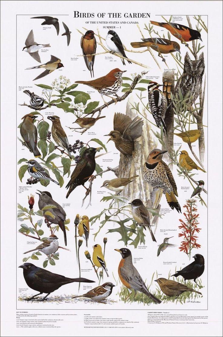 9 best backyard birds images on pinterest backyard birds big