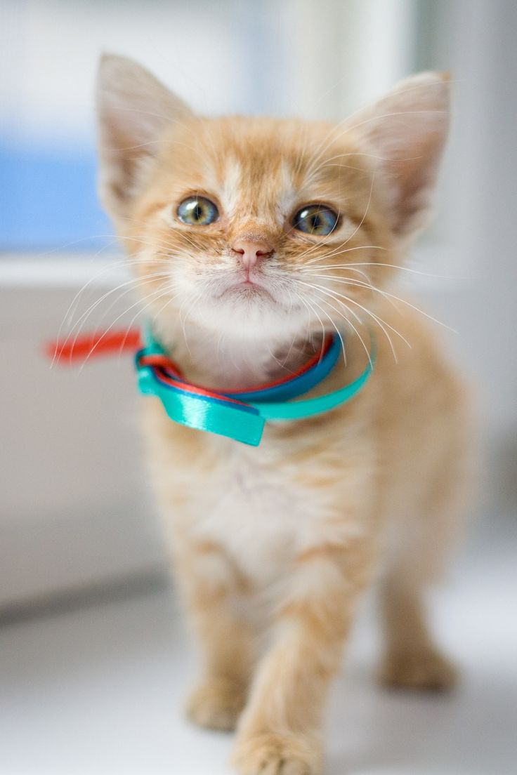 best cats images on Pinterest