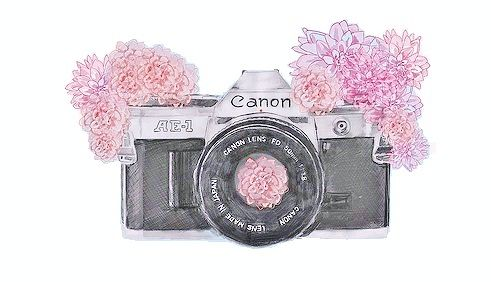 flowers and camera illustration