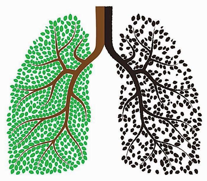 Dieta para desintoxicar pulmones en tres días - Vida Lúcida