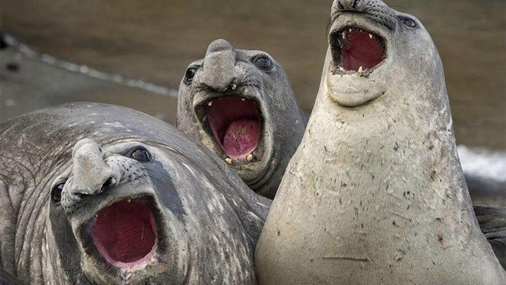 Hayvanlar aleminde saçma kareler ve bir o kadar eğlenceli karelerin yarışmasında deerceye giren 10 fotoğraf