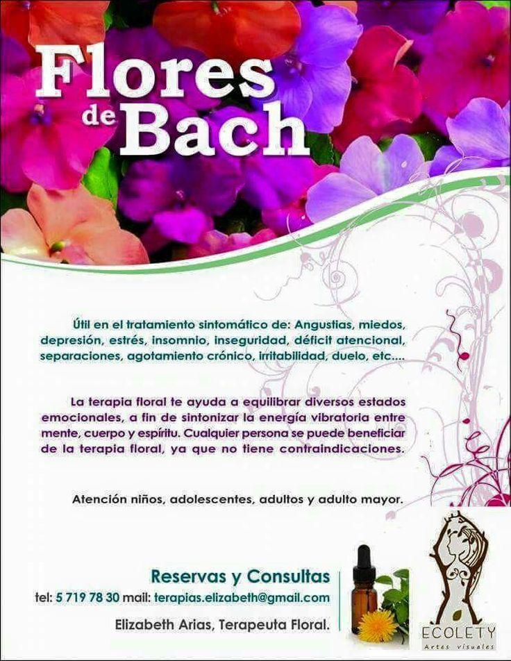 Flores de Bach en Kasa Ecolety