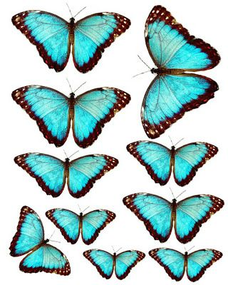 butterflies to print and cut (optimal paper size: 5x7)