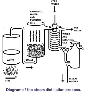How to Make Essential Oils:  Making Essential Oils - Steam Distillation, CO2's and Absolutes ~ a GREAT site to show the distillation process.  Using a canner pot, you can do the same process!  AWESOME!