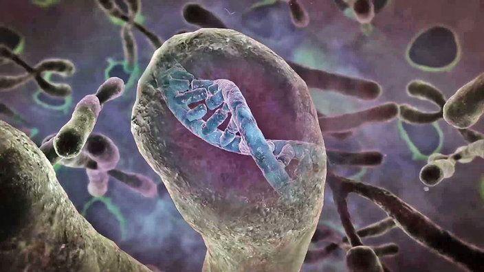 Gene selbst steuern? Die fünf wichtigsten Fragen zu Epigenetik