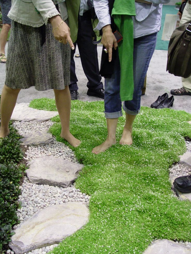 Stepables, a grassy replacement for walkways and small areas - soft and cool to the touch, and the more they get stepped on, the more they thrive!