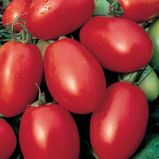 Viva Italia Tomato
