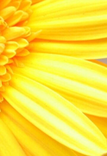 2314 best images about mellow yellow on pinterest