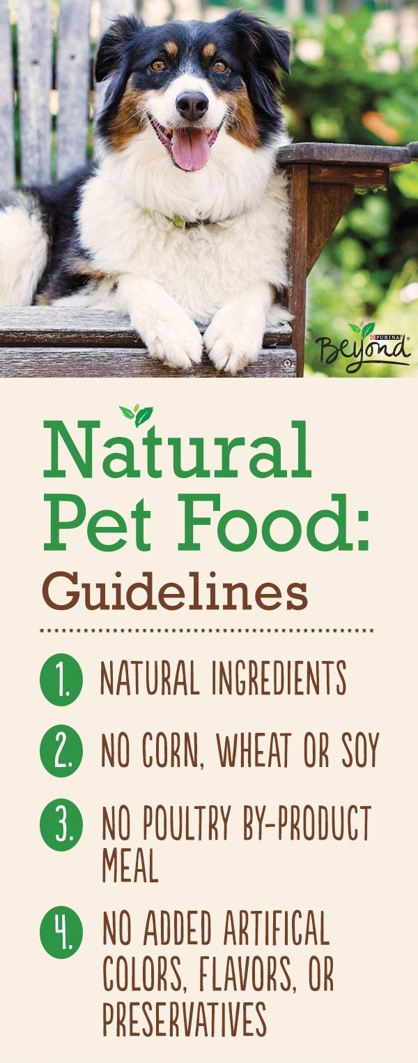 Four guidelines that are simple, realistic and totally do-able when it comes to supporting your dog's long-term health. When looking for a natural dog food, start with these guidelines, then check to see how the food goes beyond the label. Find out how the ingredients are sourced. Ask if your pet food employs an on-staff pet nutritionist, and find out how they manage quality assurance.