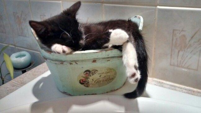 Temps de dormir dans un panier!/Time to sleep in a basket!