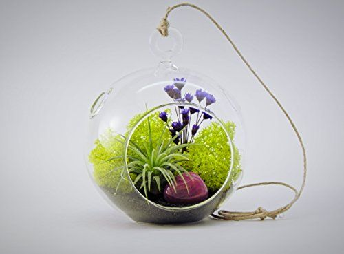 """Bliss Gardens Air Plant Terrarium With 4"""" Round Glass / Enchanted Forest"""